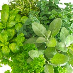 herbs-img